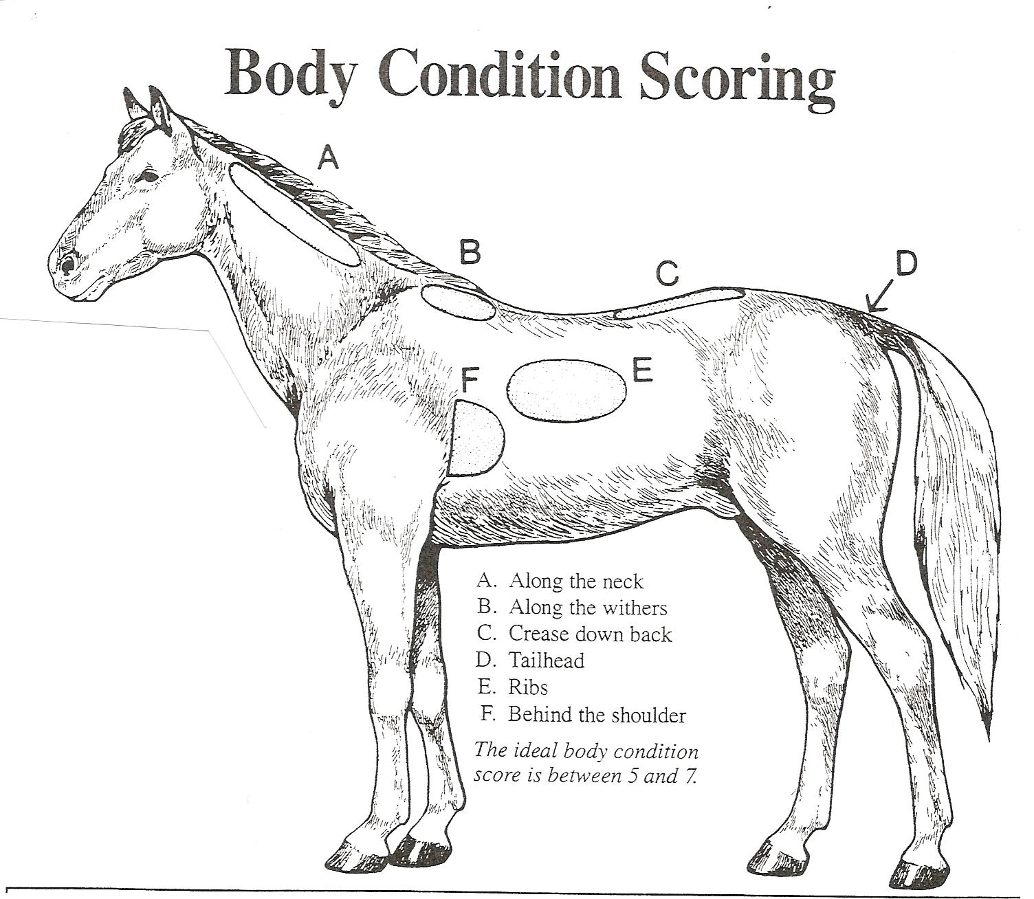Horse Withers Diagram - DIY Wiring Diagrams •